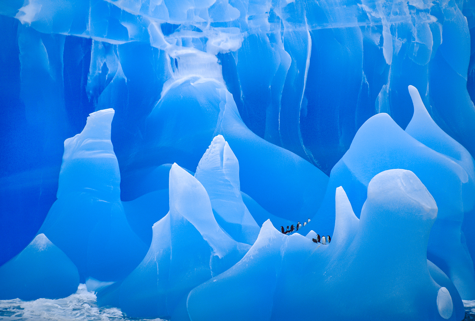 Chinstrap Penguins on Iceberg, Antarcitca