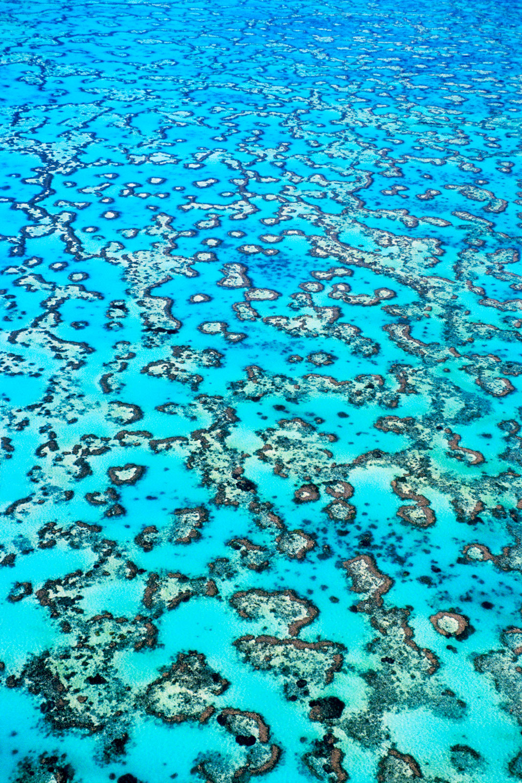 Coral reefs, Great Barrier Reef, Australia