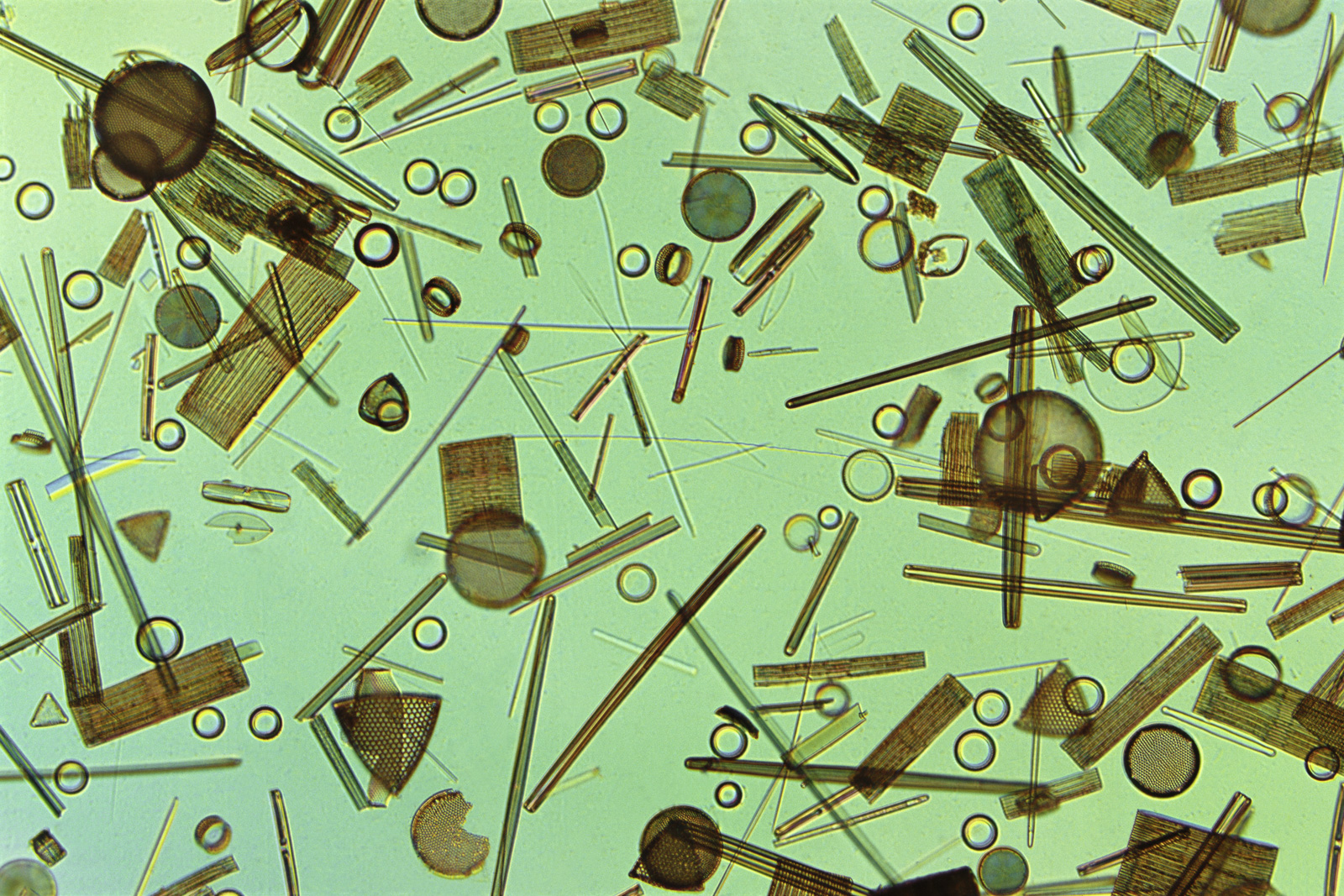 Diatoms, Farlow Herbarium, Harvard University, USA