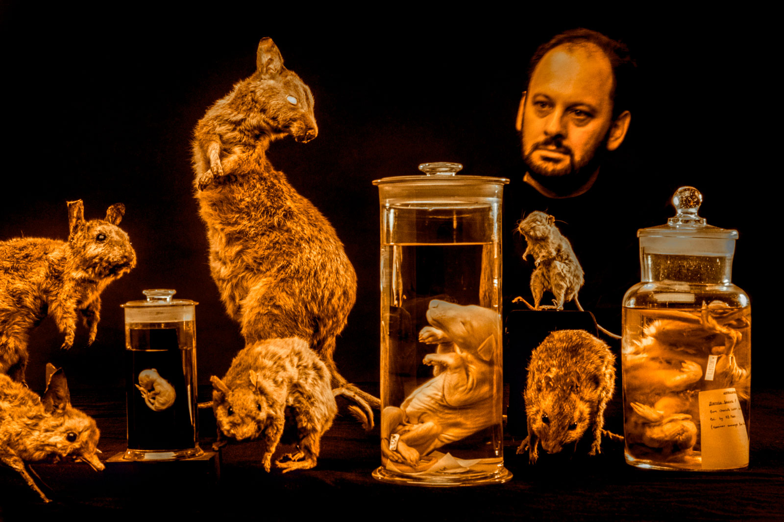 Dr. Tim Flannery with specimens of extinct marsupials, Australian Museum, Sydney, Australia