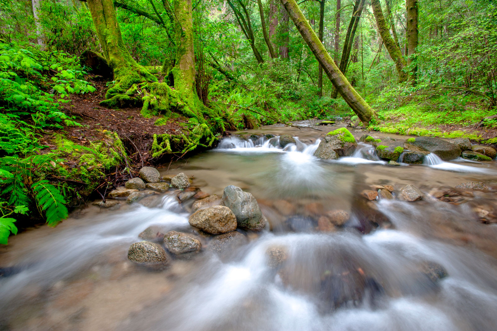 Flowing creek, Henry Cowell State Park, Monterey Bay, California,USA