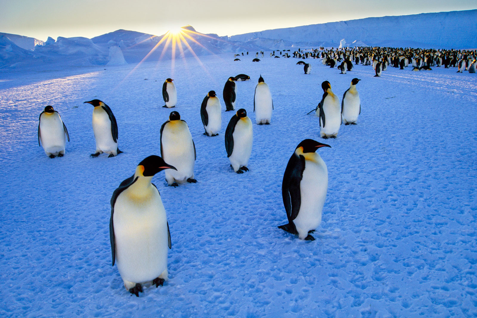 Emperor penguins and setting sun, Weddell Sea, Antarctica
