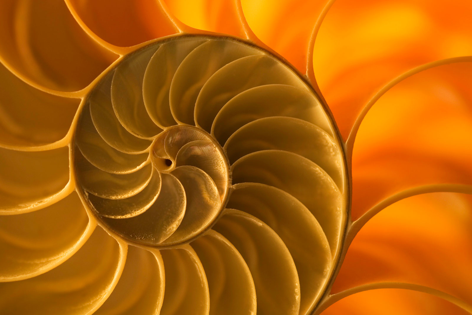 Nautilus shell, South Pacific Ocean