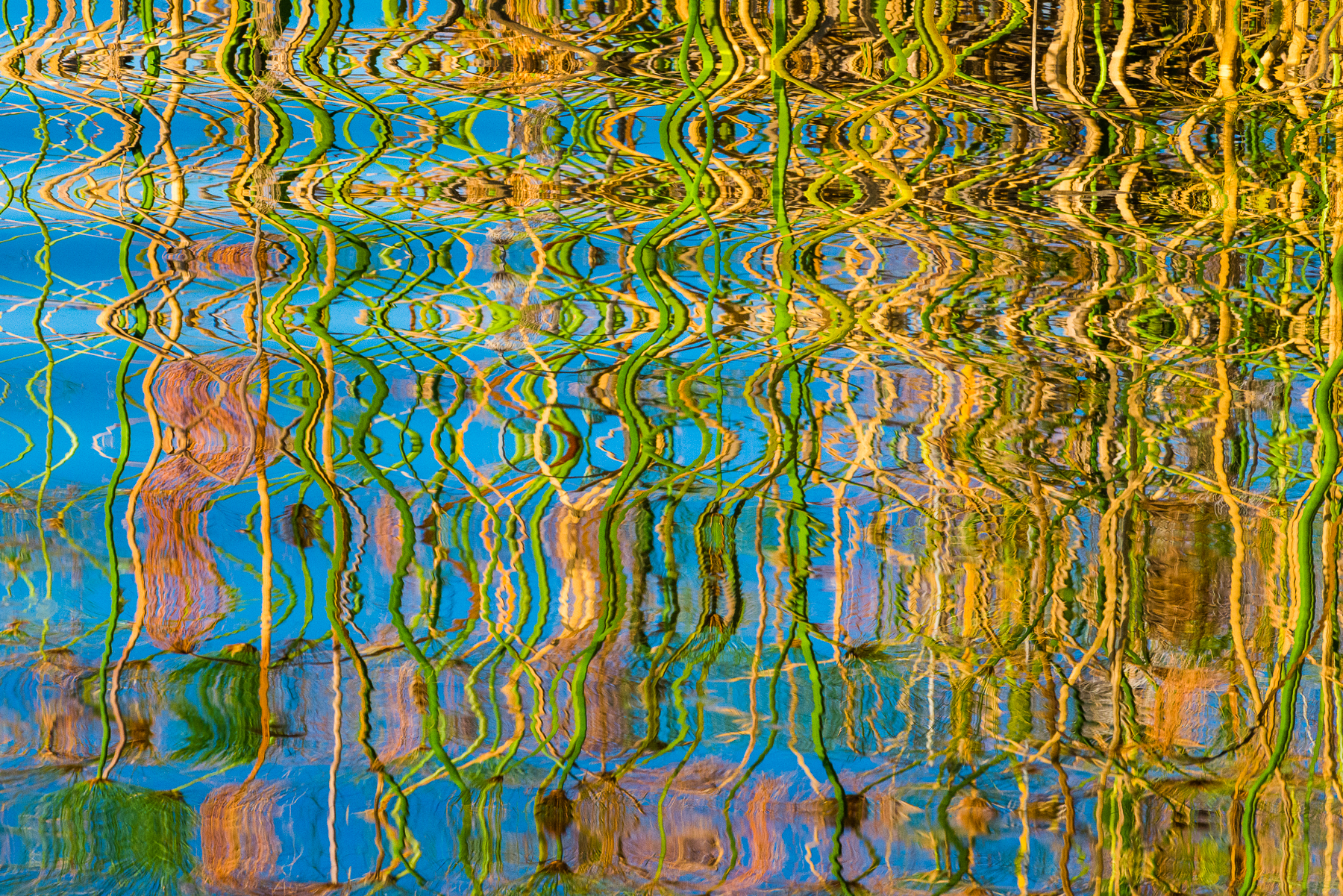 Papyrus reflections in water, Botswana