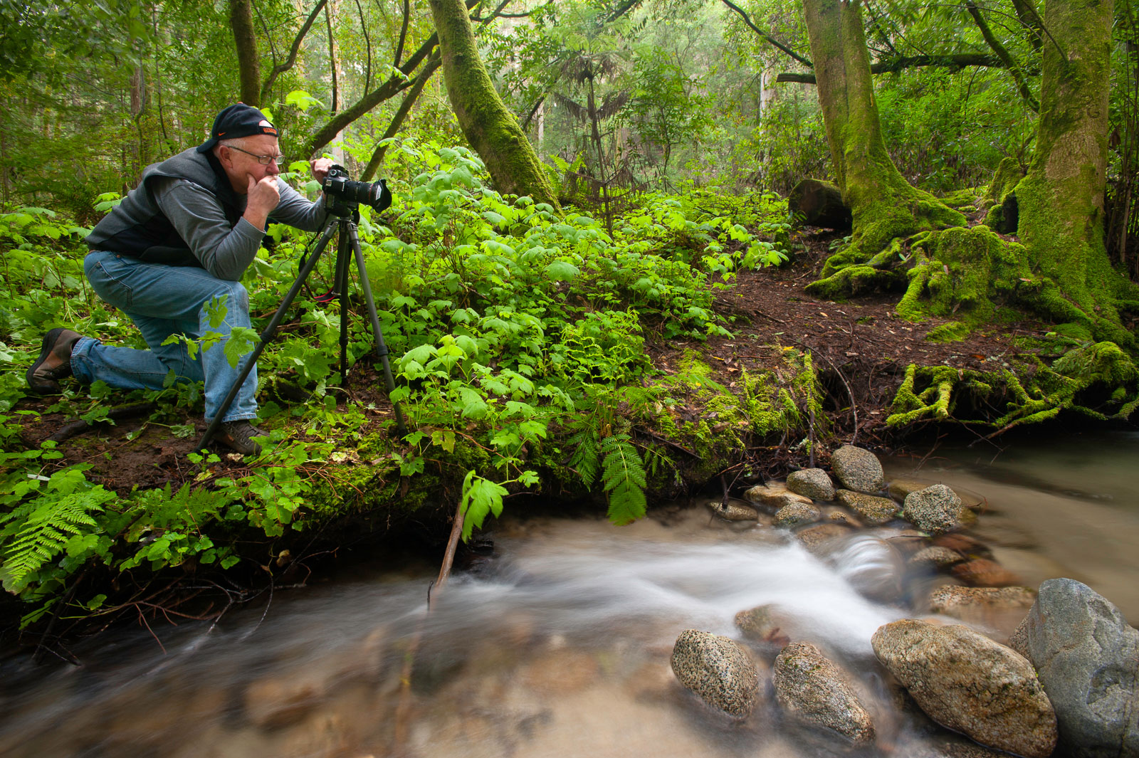 Workshop participant photographing creek, Henry Cowell State Park, Monterey Bay, California