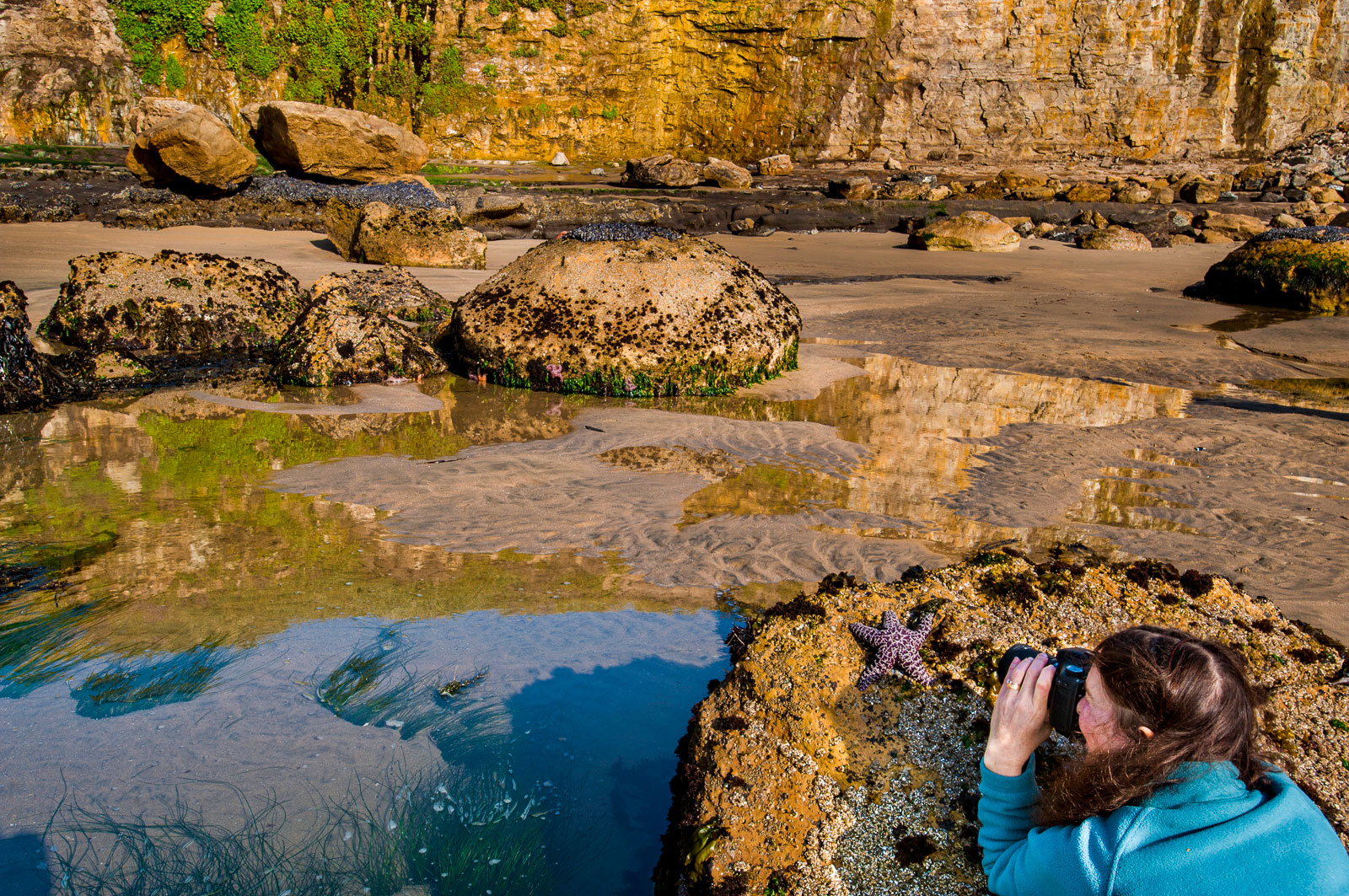 Workshop participant photographing ochre sea star, Four Mile Beach, Monterey Bay, California