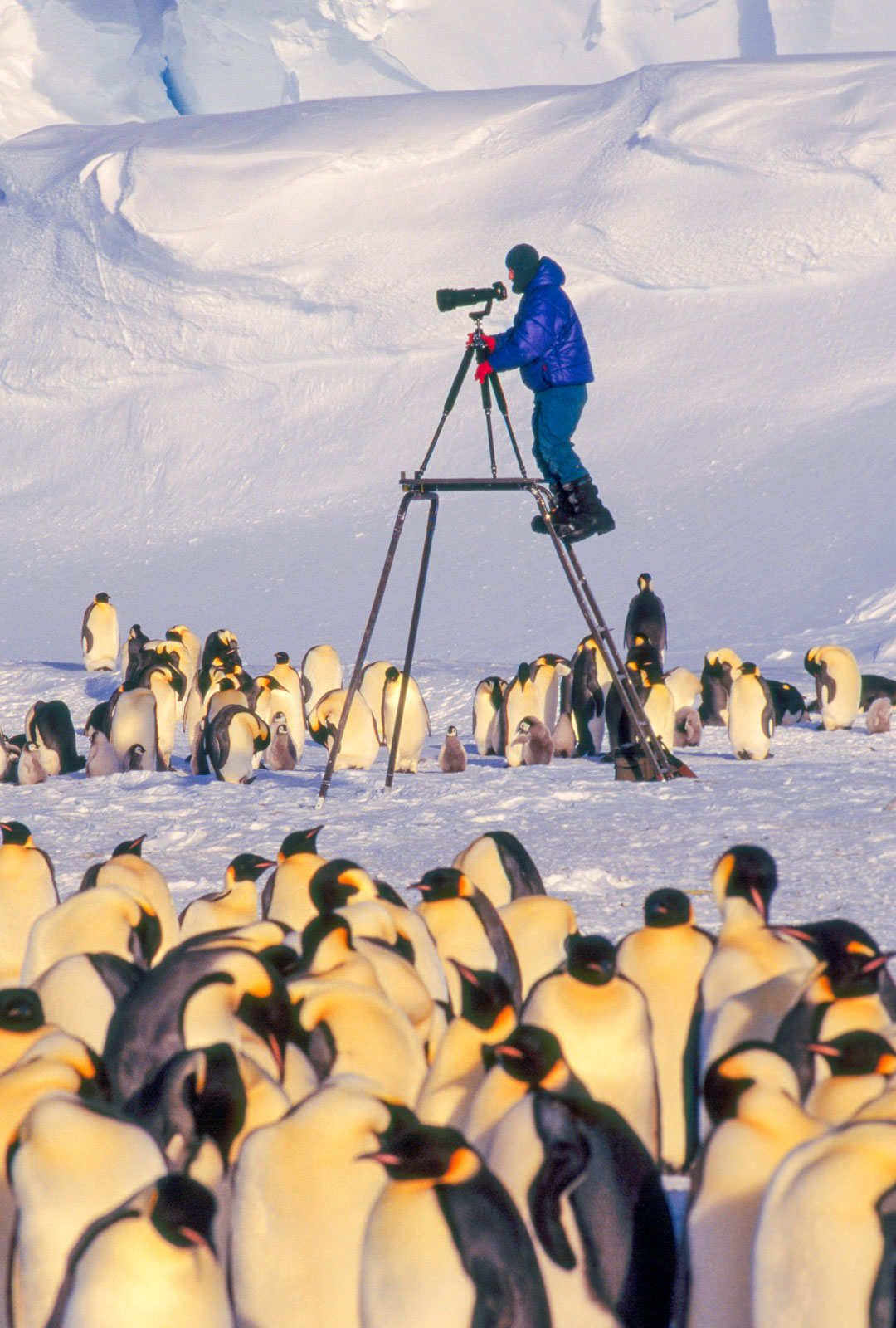 Frans Lanting photographing emperor penguins from scaffold, Antarctica