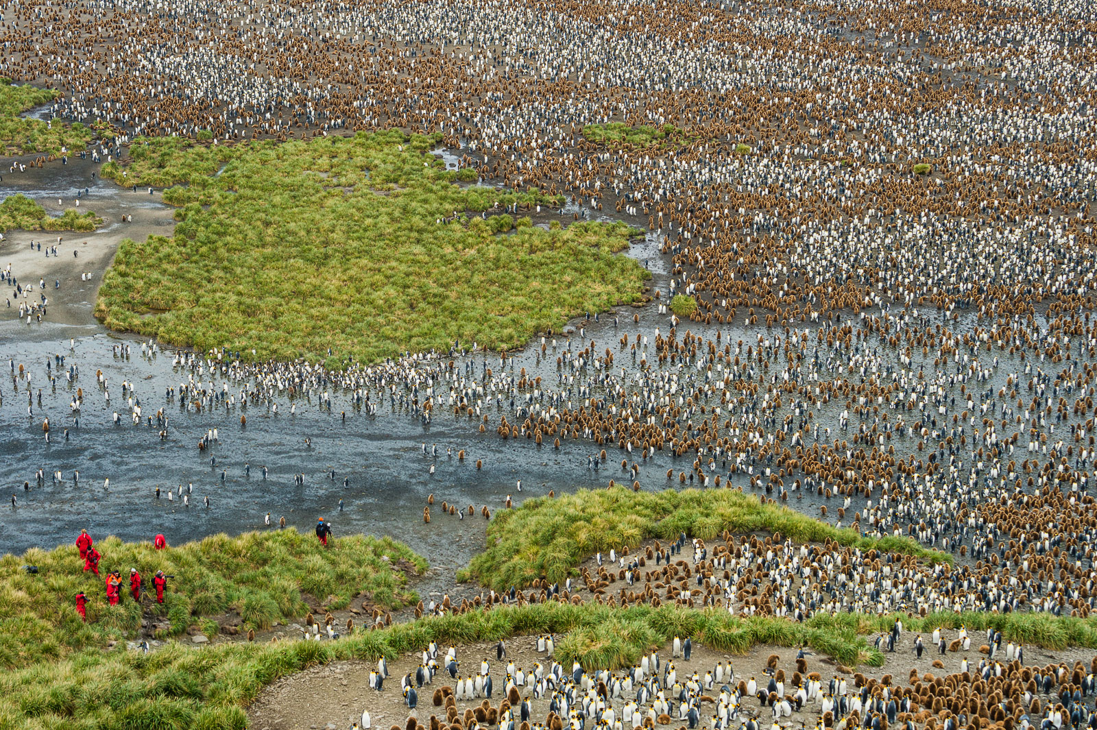 Tourists at edge of King Penguin colony, Salisbury Plain, South Georgia Island, Antarctica