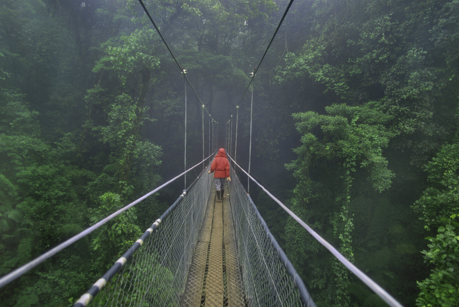 Hiker on canopy walkway, Monteverde Cloud Forest Preserve, Costa Rica