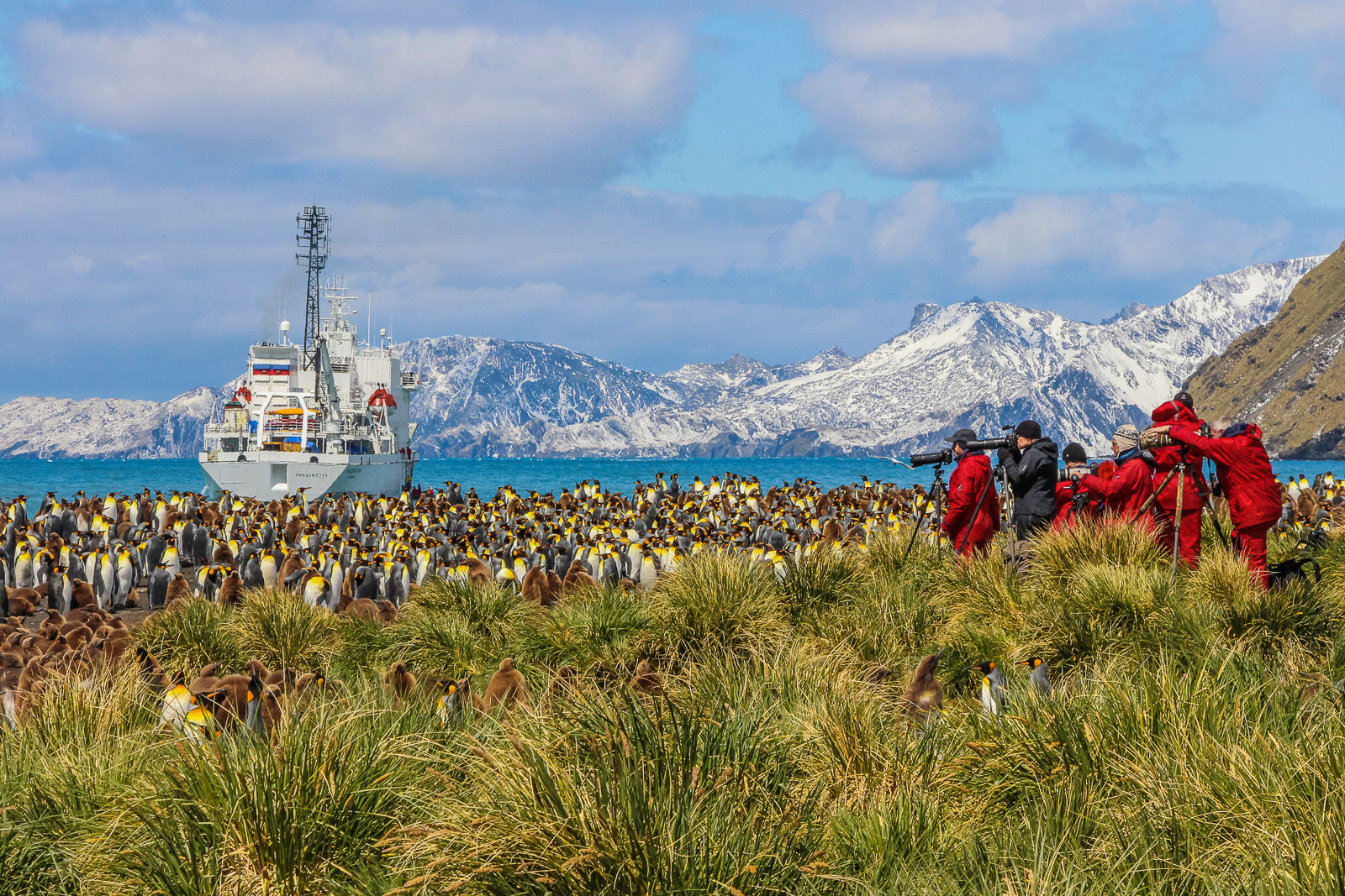 Frans Lanting and workshop participants photograping King Penguins, Gold Harbour, South Georgia Island, Antarctica