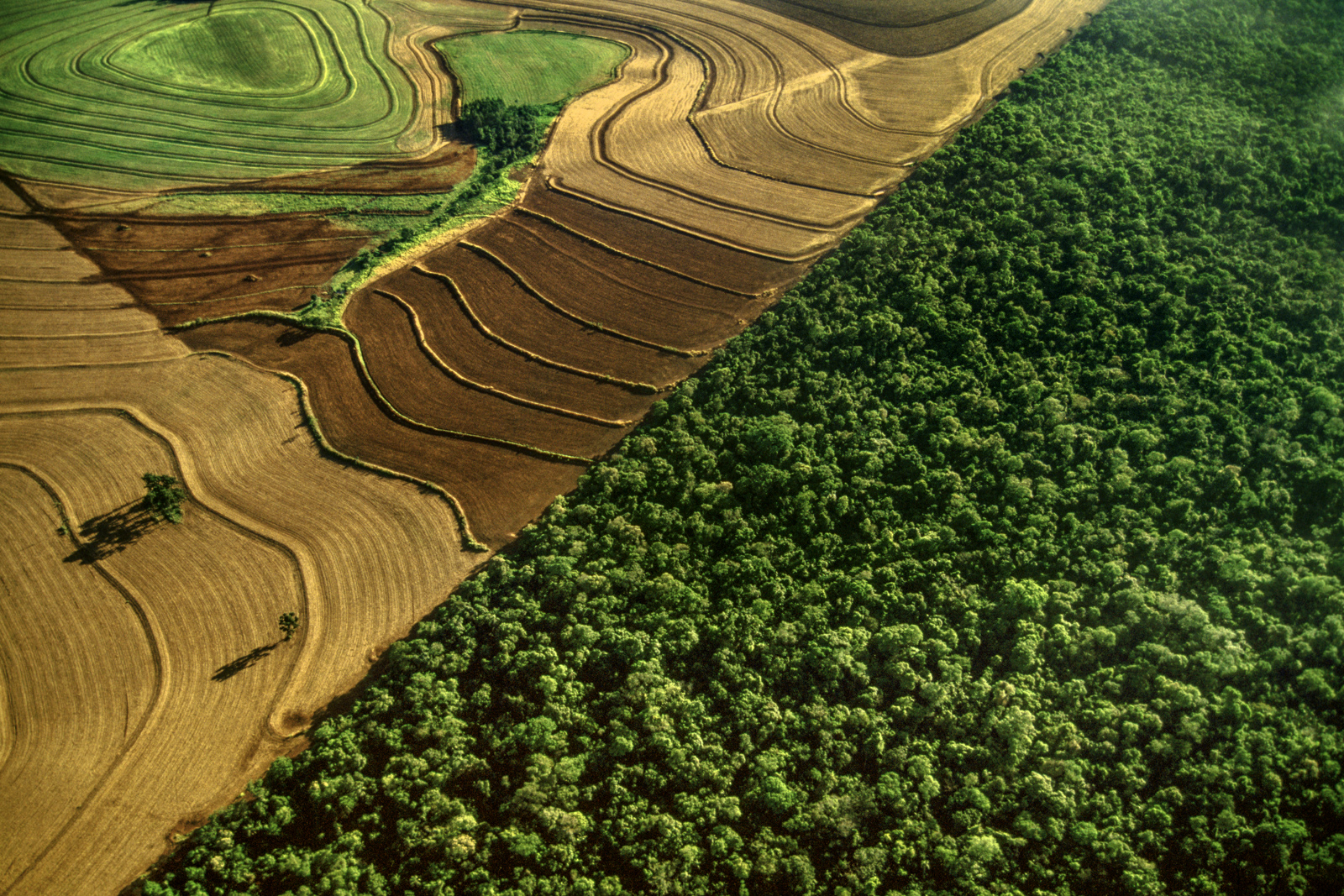 Cropland bordering rainforest habitat, Iguacu National Park, Brazil