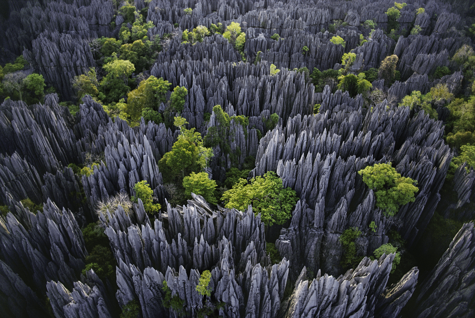 Eroded limestone pinnacles, Bemaraha National Park, Madagascar