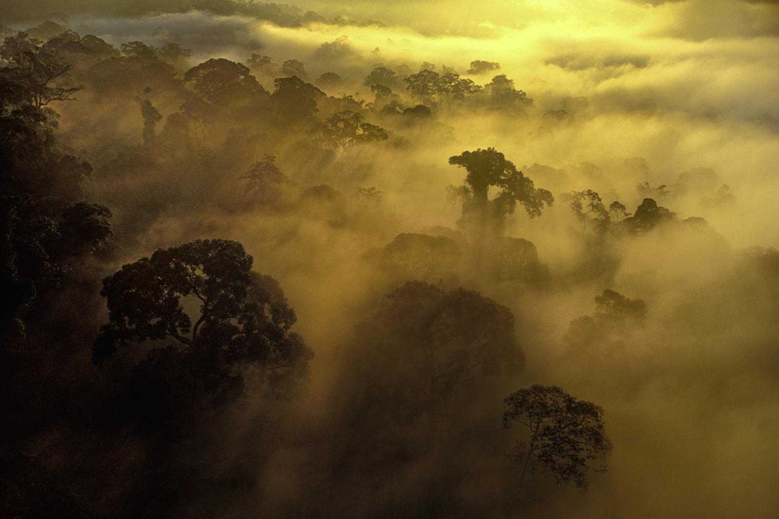 Morning mist over rainforest, Danum Valley Conservation Area, Borneo