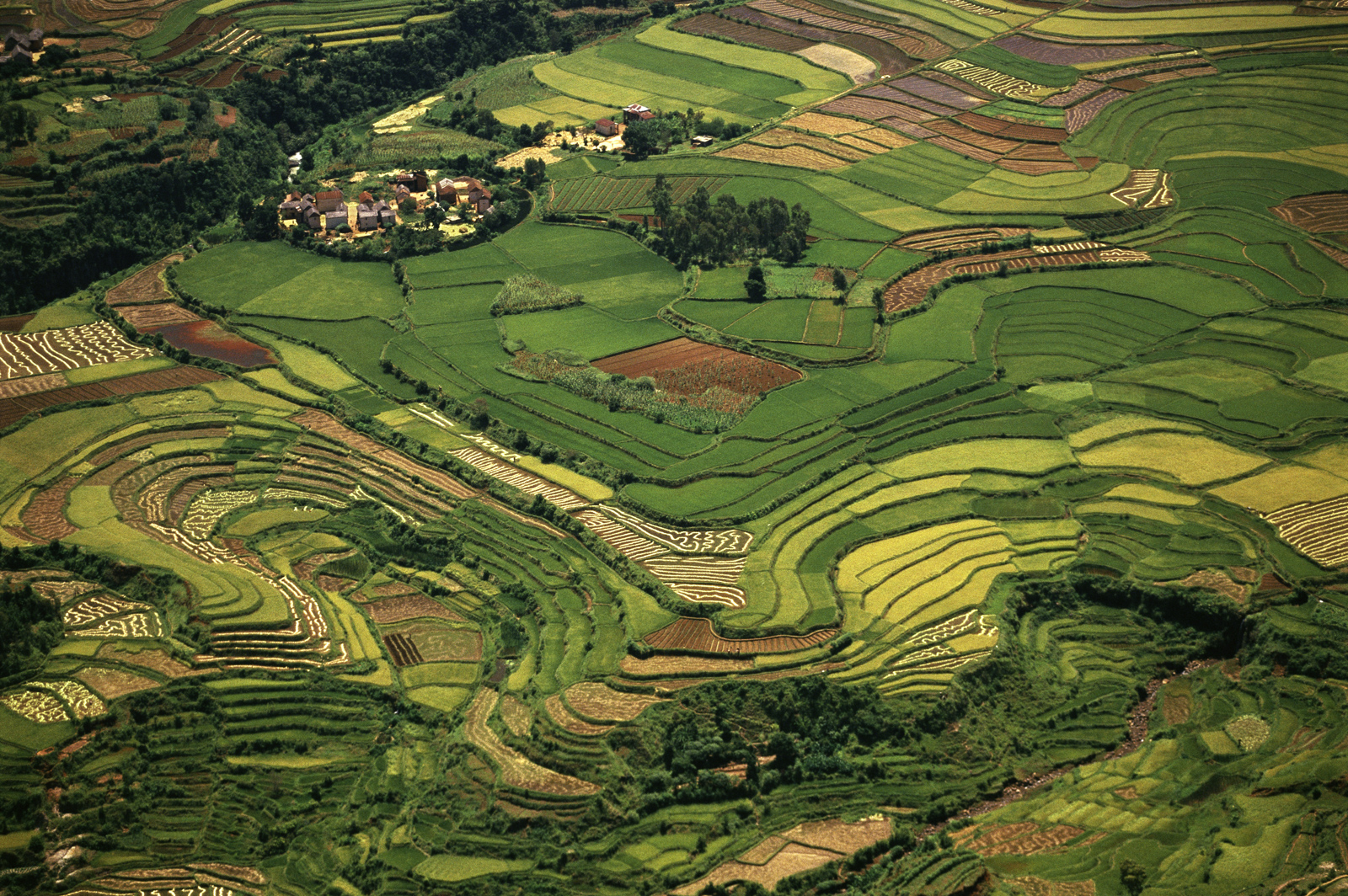 Terraced rice paddies, Central Madagascar